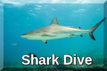 st Thomas shark dive