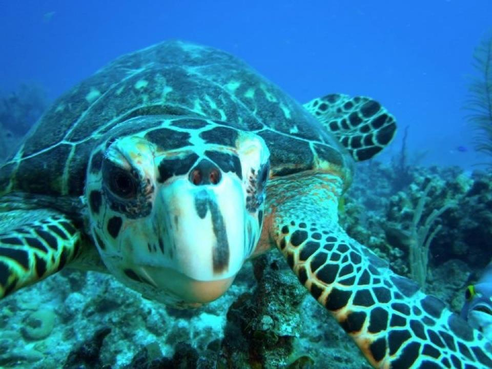st thomas turtle